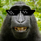 Selfie monkey sunglass