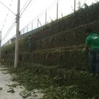 Theverde - Jardineiro