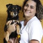 Adestramento/Aula Para Animais