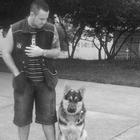 Adestrador de Cães - Há 10 ...