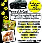 Taxi dog panfleto