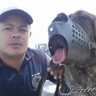 Adestrador de Cães a 23 Ano...