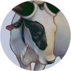 Boi profile 2
