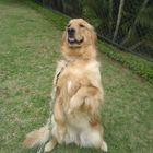 Adestrador de Cães e Passea...