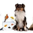 Pet sitter baba de animais 23196 mlb20243050623 022015 o