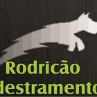 Rodricão Adestramento de Cã...